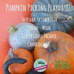 Pumpkin Picking Play Date October 2015