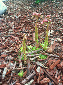 funny lil plants