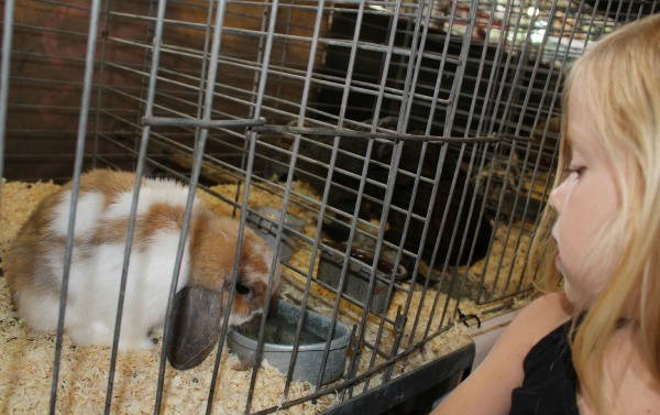 Iowa-State-Fair-Avenue-of-the-Breeds-Bunny