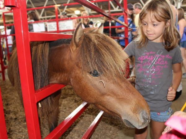 Iowa-State-Fair-Avenue-of-the-Breeds-Pony