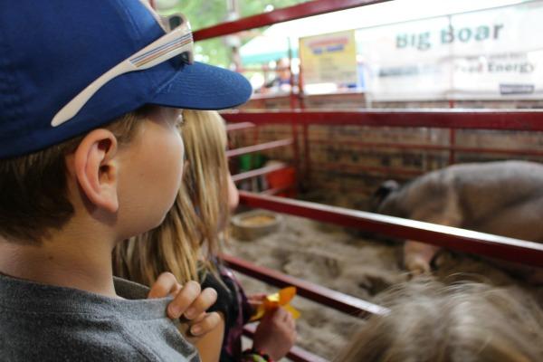 Iowa-State-Fair-Big-Boar-Display