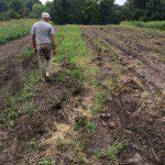 Tony_planter_rows