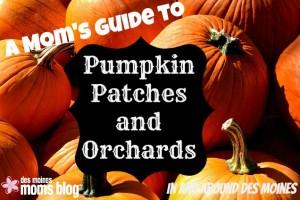 pumpkinpatch pic