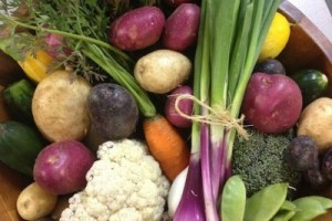 New Family Farm, CSA, Local Produce