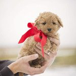 Meet Our Newest Family Member: Things to Consider Before Buying a Family Dog