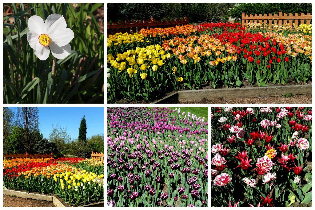 Spring flowers in bloom at Reiman Gardens, Ames, Iowa. Photo by Jody Halsted