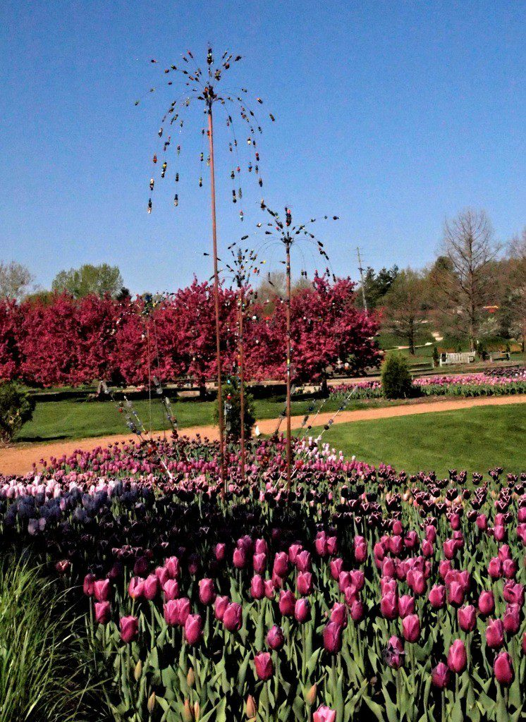 Garden art in purple tulips at Reiman Gardens in Ames, Iowa. Photo by Jody Halsted