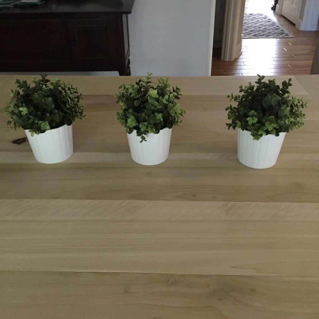 IKEA Plants   Des Moines Moms Blog