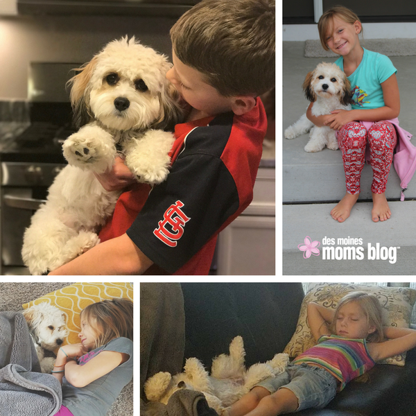 Puppy Love: How Getting a Dog Changed My Family (and Me) | Des Moines Moms Blog