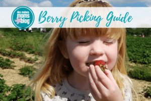 berry picking guide