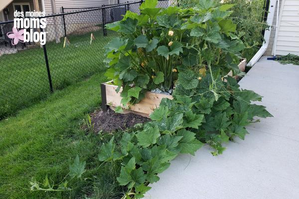 backyard gardening garden organic des moines moms blog