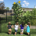 The Goddard School® Waukee: Gardening with Your Preschooler