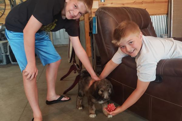 new puppy des moines moms blog